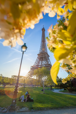 Eiffel Tower with spring tree in Paris, France photo