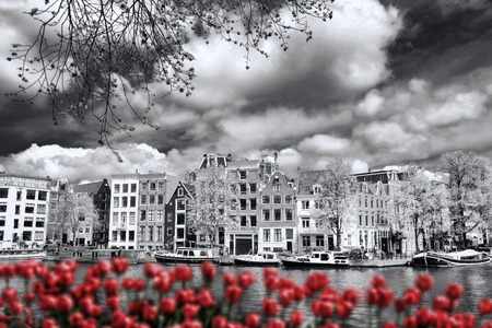 holland landscape: Amsterdam city with boats on canal against red tulips in Holland Stock Photo