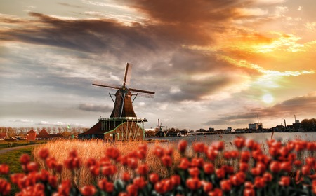 Traditional Dutch windmills with red tulips in  Zaanse Schans, Amsterdam area, Holland