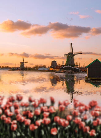 wind mills: Traditional Dutch windmills with red tulips in  Zaanse Schans, Amsterdam area, Holland