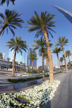 islamic wonderful: Dubai street with palm trees in  United Arab Emirates