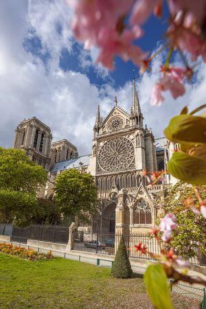 notre dame cathedral: Notre Dame cathedral in spring time, Paris, France