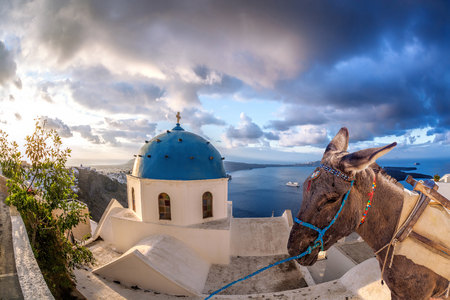 house donkey: Santorini island with donkey in Greece