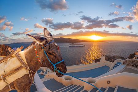 caldera: Santorini island with donkey in Greece
