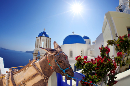 Santorini island with donkey in Greece Stock Photo - 50511925