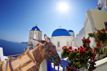 Santorini island with donkey in Greece