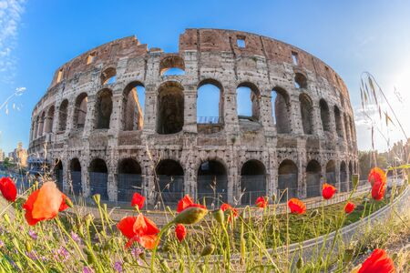 emporium: Colosseum with spring flowers in Rome, Italy