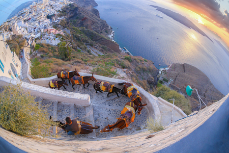 house donkey: Donkeys against colorful sunset on Santorini island in Greece Stock Photo