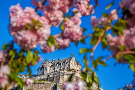 lothian: Edinburgh castle with spring tree in Scotland