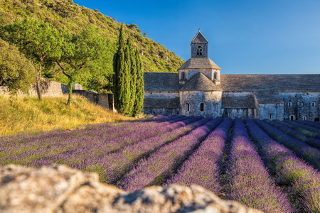 senanque: Lavender fields at Senanque monastery in Provence, France