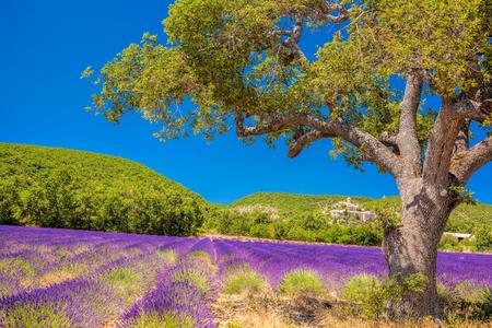 plateau: Simiane la Rotonde village with lavender field in Provence, France