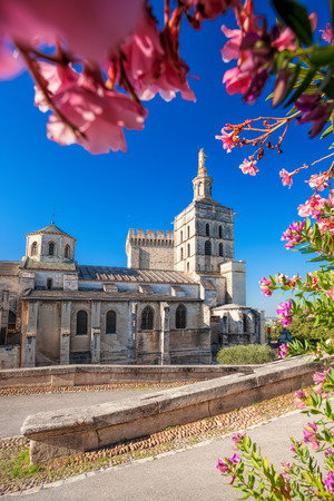 avignon: Avignon cathedral with flowers in Provence, France