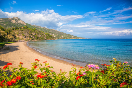 sandy beach: Panorama of Porto Zorro beach against colorful flowers on Zakynthos island, Greece