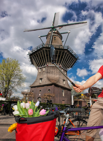Famous Amsterdam with basket of colorful tulips against old windmill in Holland