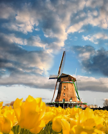 Traditional Dutch windmill with tulips in Zaanse Schans, Amsterdam area, Holland Stock Photo