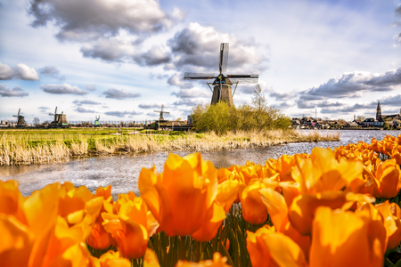 dutch: Traditional Dutch windmill with tulips in Zaanse Schans, Amsterdam area, Holland Stock Photo