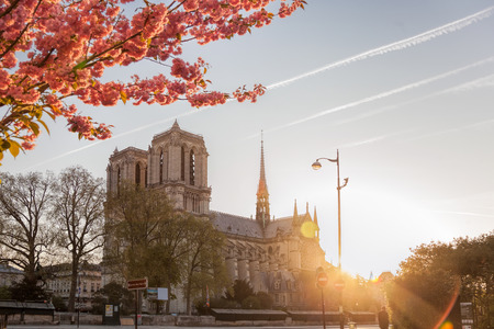Paris, Notre Dame cathedral with spring trees in France Reklamní fotografie - 119604990