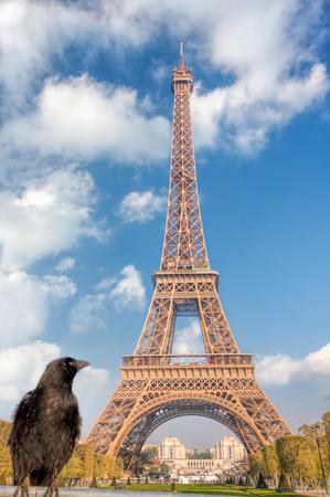 Raven looking at the Eiffel Tower in Paris, France Reklamní fotografie - 119604993