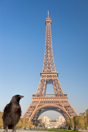 Raven looking at the Eiffel Tower in Paris, France