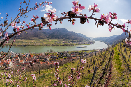 Spring time in Wachau, Spitz village with boat on Danube river, Austria Reklamní fotografie - 120139590