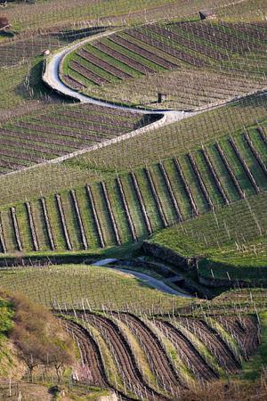 Spring vineyards in Wachau, Austria