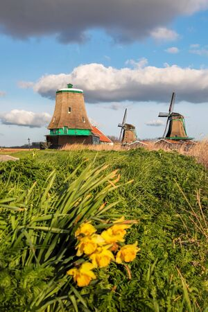 Traditional Dutch windmills with spring flowers in Zaanse Schans, Amsterdam area, Holland Zdjęcie Seryjne
