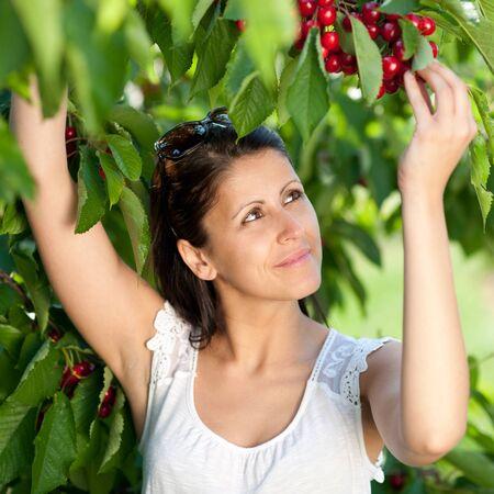 Beautiful young girl picking cherries Stock Photo - 9775263