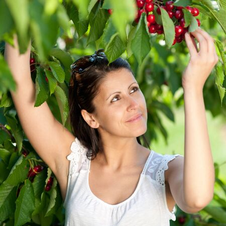 Beautiful young girl picking cherries Stock Photo - 9775263