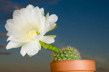Cactus flower Stock Photo - 9783997