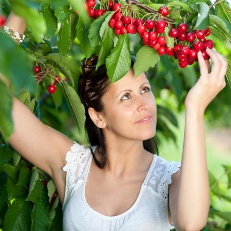 Beautiful young girl picking cherries Stock Photo