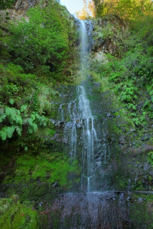 Waterfall on levada do calderiao verde Madeira Portugal Stock Photo - 13366246