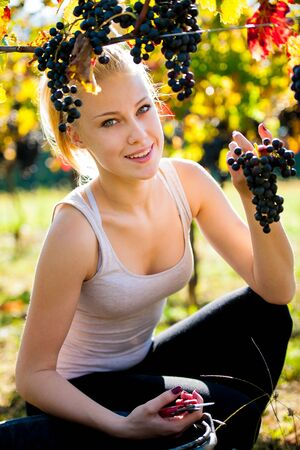 grower: Beautiful young blonde woamn harvesting grapes outdoors  in vineyard