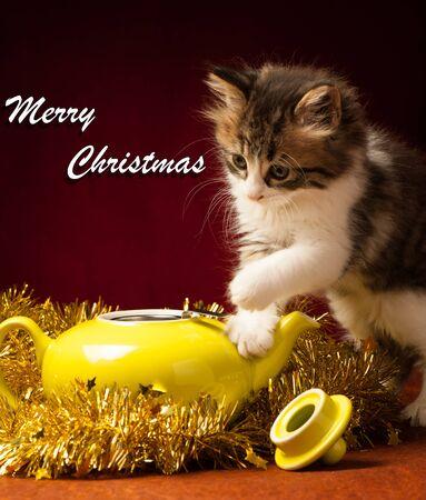gato jugando: Gato joven que juega con los ornamentos de Navidad