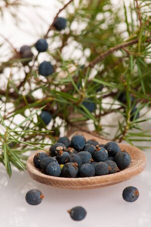 ful: Branch of conifers junipers and wooden spoon ful of blue berries on white background. Stock Photo