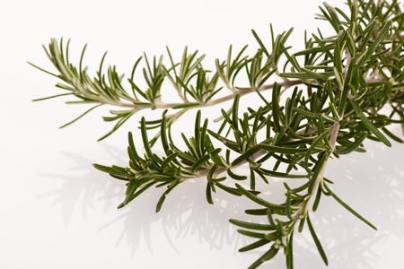 mediterranian: Twig of green fresh rosemary, mediterranian spice, isolated over white background.