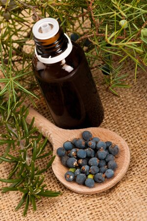 ful: Branch of conifers junipers, wooden spoon ful of blue berries, and twig of rosemary little bottle of fresh oil for aromatherapy on white background. Stock Photo