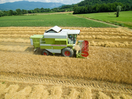 Wheat harvest - aerial photography of combine harvesting grain - agriculture .