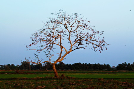 yielding: OLD TREE
