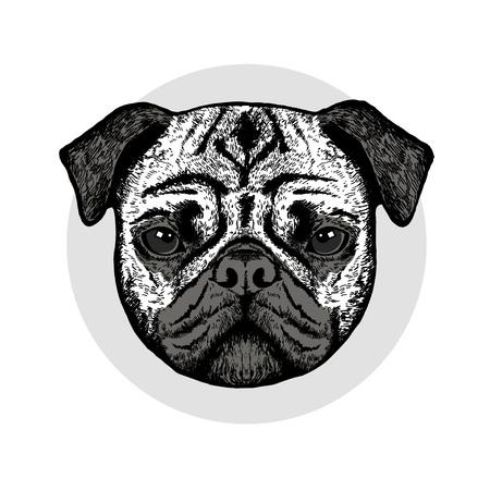 Graphically cute pug dog on grey background Illustration