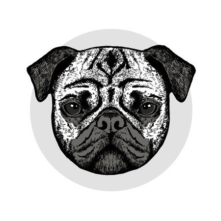 Graphically cute pug dog on grey background Illustration