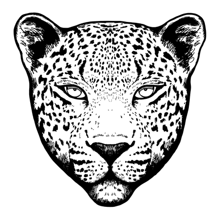 panthera pardus: Graphical leopard head on white background -illustration