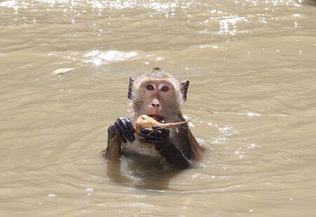 soak: monkey  soak