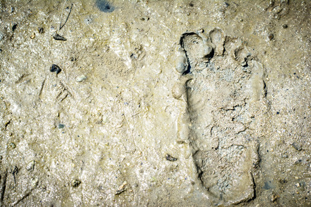 Pattern background of footprint on mud at the mangrove forest