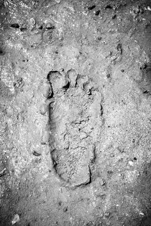 Pattern background of footprint on mud at the mangrove forest with black and white color
