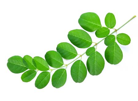 Moringa oleifera leaf isolated on a white background