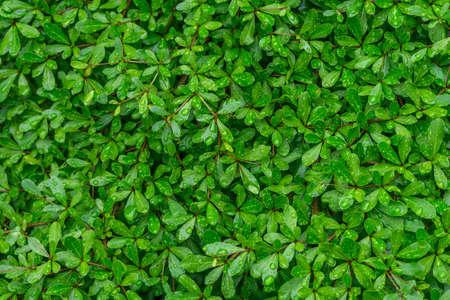 kropla deszczu: tree leaf with raindrop Zdjęcie Seryjne