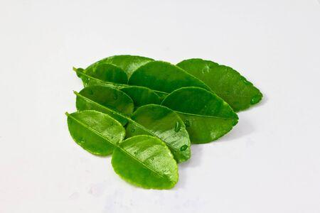 Kaffir lime leaf  Stock Photo