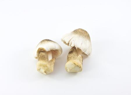 Straw mushroom isolated on white background
