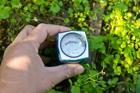 Testing the moisture content of soil in houseplants