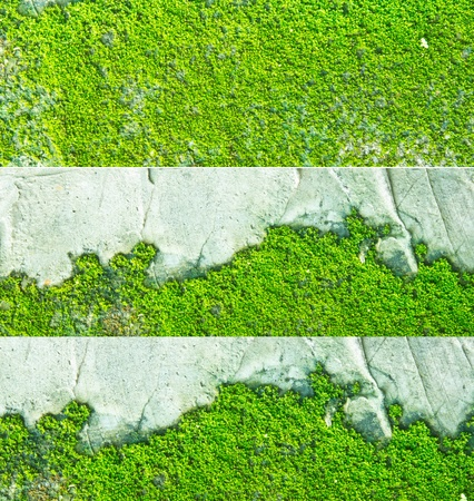 green moss on concrete wall